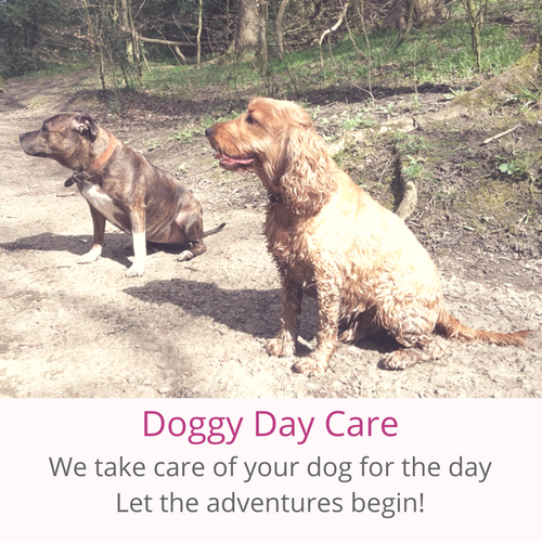 Park Pals Dog Walking Services, Boarding, doggie day care, overnight stays, walks, dogs, sheffield dogs, in Sheffield.